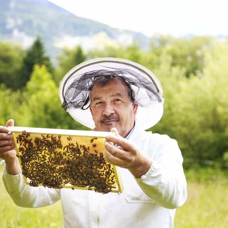 Slow Food Kärnten - Honig