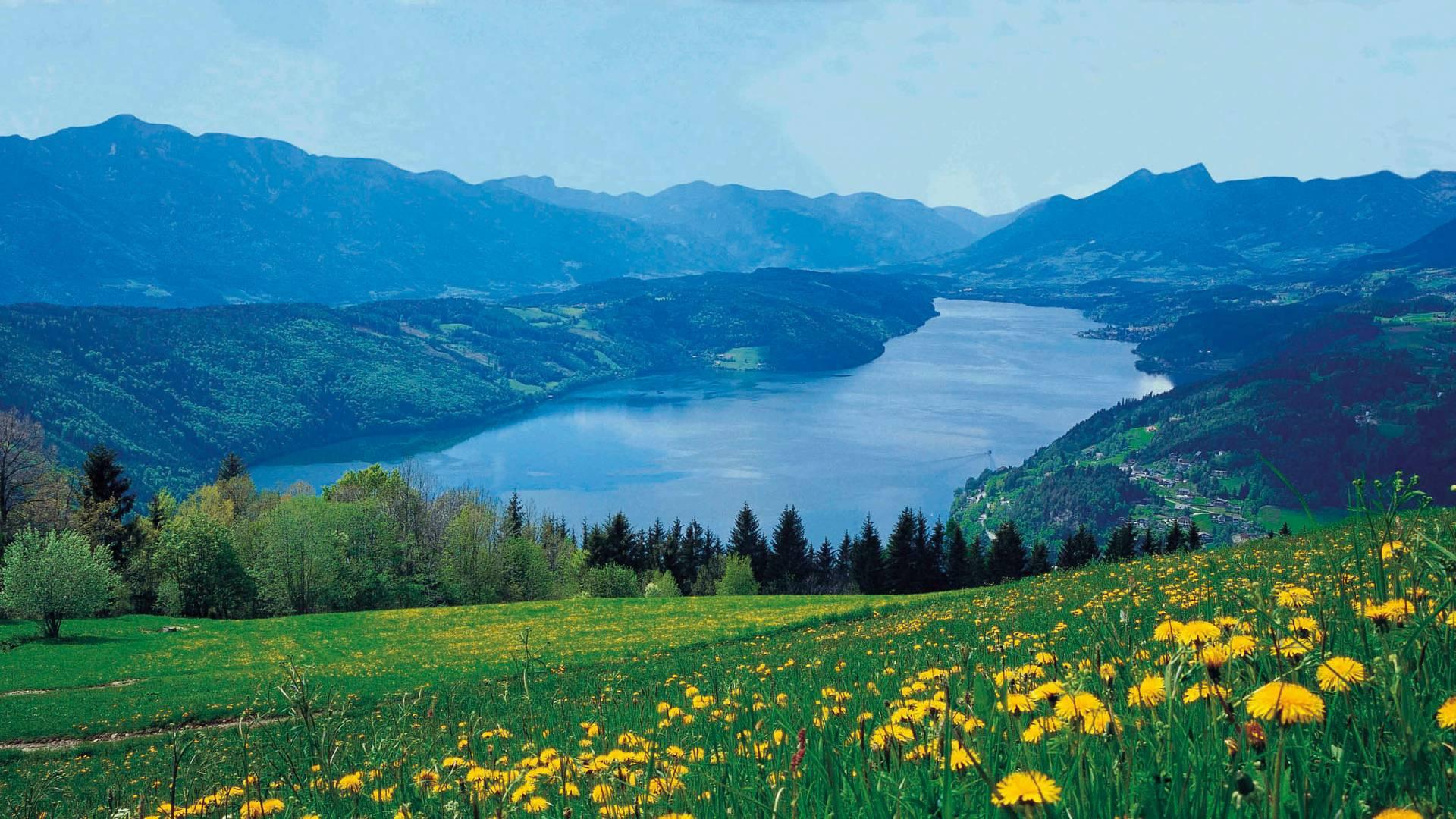 Blick auf den Millstätter See, Blumenwiese