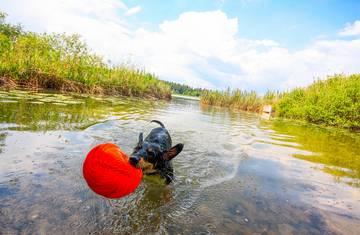 Urlaub mit Kind und Hund © pixelpoint multimedia, Wolfgang Handler